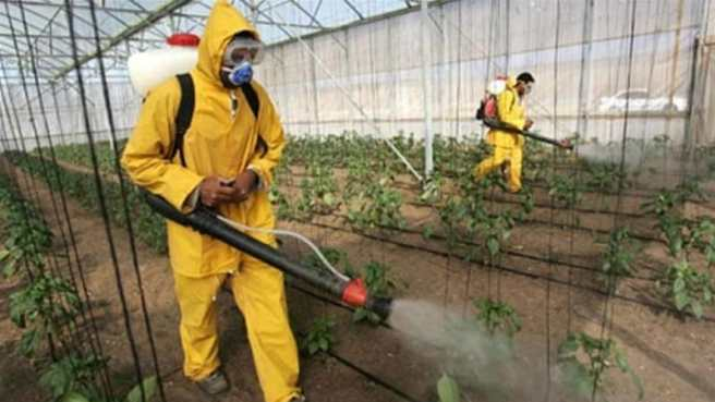 Importance of Pest Control